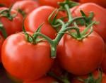 tomatoe cluster
