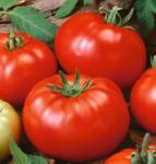 beefsteak-tomatoes2